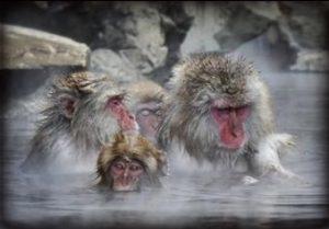 風邪,早く治る,風呂,入り方,シャワー,熱い風呂,温度,